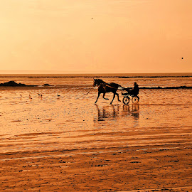 Sunset ride by Ciprian Apetrei - Sports & Fitness Other Sports ( freedom, sunset, horse cart, brittany, beach,  )