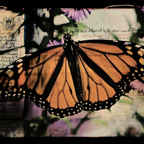 All in the words by Dawn Vance - Typography Words ( butterfly, orange, words, purple, monarch, card, insect, black, flower )