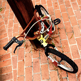 Aged Bike by Richard Timothy Pyo - Transportation Bicycles