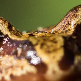 I see you..! by Svein Erik Bakken - Animals Amphibians ( macro, nature, frog, amphibian, nature up close, eyes )