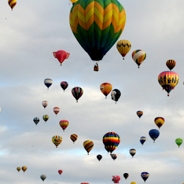 Sunrise Mass Ascension by Alexandria Shankweiler - Landscapes Sunsets & Sunrises ( sky, colors, hot, festival, air, balloons, new mexico )