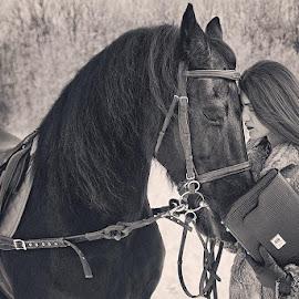 Attraction by Daniel Alexandru - Animals Horses ( wild, winter, girl, www.myperfectday.ro, horse,  )