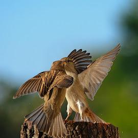 by Nikša Šapro - Animals Birds
