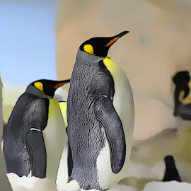 Penguins by Toni Haas - Animals Other ( penguins )