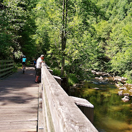 virginia creeper trail by Delores Mills - Landscapes Travel ( renewal, green, trees, forests, nature, natural, scenic, relaxing, meditation, the mood factory, mood, emotions, jade, revive, inspirational, earthly )