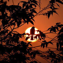 Get back home by Arindam Mitra - Nature Up Close Trees & Bushes