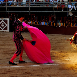 Taurine Punishment Festival by Andrei Marius Gheorghiu - Sports & Fitness Other Sports ( fight, kill for fun, kill, show, bull fight, bull, spain, arena, toreador, taurine, fiesta, festival, corida, killer, animal )