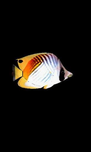 ButterflyFish2_lwp