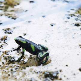 by Erin Wilks - Animals Amphibians