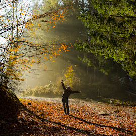 Morning light by Ovidiu Marinoiu - Landscapes Forests ( leafs, autumn, dirt road, trees, forest, sunrise )