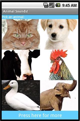Amazing Animal Sounds