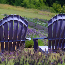 Relaxing amoung the lavender by Carol Cooper - Landscapes Prairies, Meadows & Fields ( purple, relax, landscape, flowers, lavender )