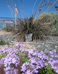 Nouveau-Mexique, fleurs mauve et quelques végétaux devant un resto..jpg