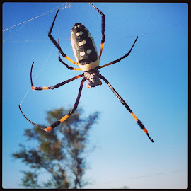 Hide and Seek by Ingrid Crouse - Animals Insects & Spiders