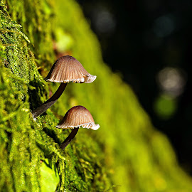 Afraid of the dark ...! by Miguel Silva - Nature Up Close Mushrooms & Fungi ( miguel silva, dark, moss, nature up close, forest, viseu, portugal, fontelo, mushrooms )