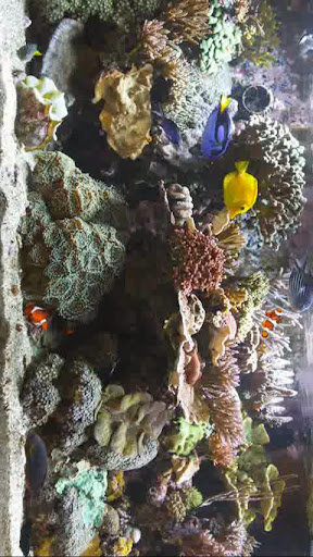 玩免費娛樂APP|下載水族館 app不用錢|硬是要APP