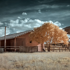 ... by Matheus Dalmazzo - Buildings & Architecture Other Exteriors ( tree, infrared, house )