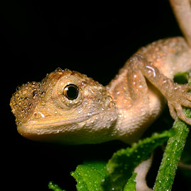 lizard by Sunny Joseph - Animals Reptiles