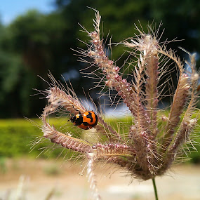 Busy Beetle ! by Darshan Trivedi - Instagram & Mobile Android ( macro, red, nature, pattern, busy, morning, design, black, beetle,  )