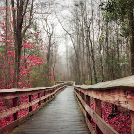 Red Walkway by Lou Plummer - City,  Street & Park  City Parks (  )