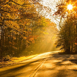Autumn Drive by Mike Martin - Landscapes Travel ( autumn, fall, morning, nj, leaves )