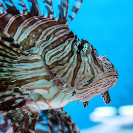 by Carrie Karki - Animals Fish
