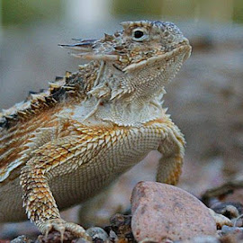 One of the residents in my front yard.Uno de los residented de el jardin de enfrente by Carlos Valdés - Animals Reptiles