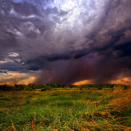 SHowers by Phil Koch - Landscapes Prairies, Meadows & Fields ( vertical, photograph, farmland, yellow, storm, leaves, love, sky, nature, tree, autumn, shadow, snow, flower, wind, orange, twilight, agriculture, horizon, portrait, dawn, winter, environment, season, national geographic, serene, trees, floral, inspirational, wisconsin, natural light, phil koch, spring, sun, photography, farm, ice, horizons, rain, inspired, clouds, office, park, green, scenic, morning, shadows, wild flowers, field, red, blue, sunset, fall, peace, meadow, summer, sunrise, earth, landscapes )