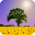 Spring Scene Live Wallpaper APK Version 1.03