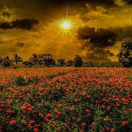 field of dreams by Rakesh B.S - Landscapes Prairies, Meadows & Fields ( field, dreams, dream, sunset, flowers, flower )