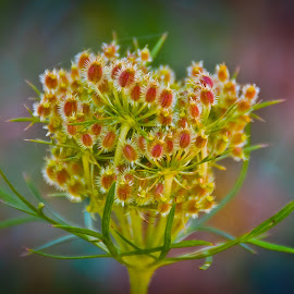 by Eduard Andrica - Nature Up Close Other plants