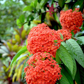 Beauty of nature by Kavinthan Uruthiramoorthy - Nature Up Close Trees & Bushes ( nature, beautiful, closeup, flower )