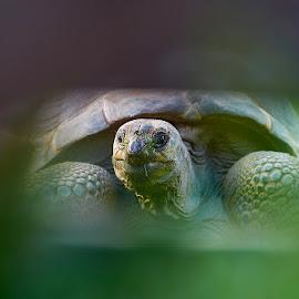 Hi by David Xichta - Animals Reptiles