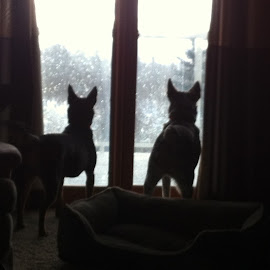 Waiting for Daddy by William J. Reisenauer - Animals - Dogs Portraits ( macy & bear )