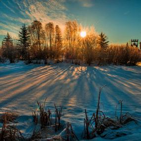 Sherwood City Park by Joseph Law - City,  Street & Park  City Parks ( blue sky, winter, alberta, bushes, snow, morning glory, trees, sherwood park, sunshine, city park, shadows )