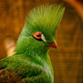 From hair dressing by Radu Eftimie - Animals Birds ( bird, green,  )