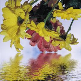 multicolor flowers by LADOCKi Elvira - Digital Art Things ( flowers )