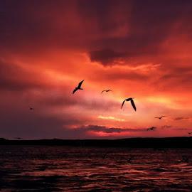 Góđan daginn frá Höfn :) Njótiđ dagsins by Linda Ragnarsdottir - Landscapes Sunsets & Sunrises