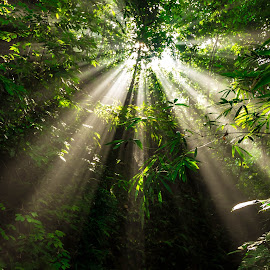 Heaven light by Animesh Dhar - Landscapes Forests ( ray of light, forest, landscape, sun, mist )