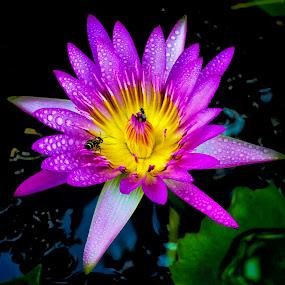 by Kokien Photography - Flowers Single Flower