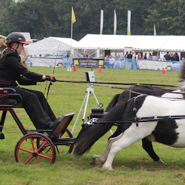 Alresford show by Duncan Bryant - Animals Horses