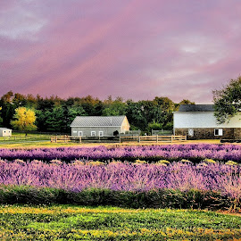 Lavender fields. by Valerie Stein - Buildings & Architecture Homes ( creativity, lighting, art, artistic, purple, mood factory, lights, color, fun )