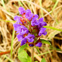 Common Self-Heal