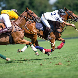 Polo by Kevin Yang - Sports & Fitness Other Sports