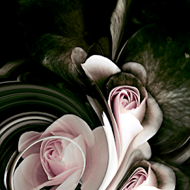 DELIGHT by Carmen Velcic - Digital Art Abstract ( abstract, dark, white, roses, pink, flowers, digital )