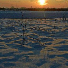 Snow Field by Nat Bolfan-Stosic - Landscapes Sunsets & Sunrises ( field, winter, cold, sunset, snow )