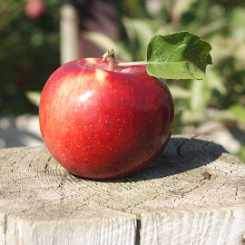 The Amazing Apple by Faith Mayer - Food & Drink Fruits & Vegetables