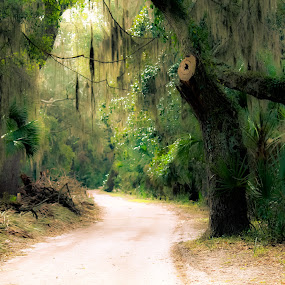 Trail of wonders  by Angela Taylor - Landscapes Forests ( water, st. marys, green, cumberland island, forest, ocean, angel oak trees, trails, island, spanish moss,  )
