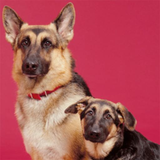 Training German Shepherds 書籍 App LOGO-APP開箱王