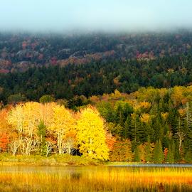 Fall Foliage, Maine by Bala Ve - Landscapes Forests ( fall colors, maine, fall foliage, forest, north east )